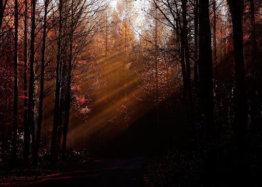 Natuurfotograaf Blog Alle Kleuren Van De Herfst BSO Buiten